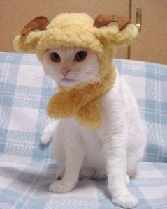 Je suis un mouton mais je ne le sais pas encore