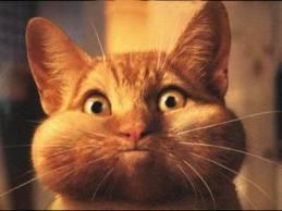 chat-qui-vomit